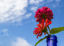Fresh red flower with blue sky background Stock Image