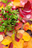 Fresh red forest cranberries in pot fall leaves wooden background autumn Royalty Free Stock Image