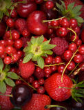 Fresh red  fruit  background Stock Images