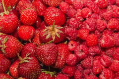 Fresh red fruit Royalty Free Stock Photography