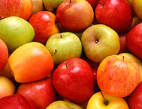 Fresh red and golden apples Stock Photo