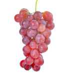 Fresh red grape on white background. Fresh red grape on a  white background Royalty Free Stock Photography