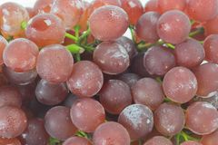 Fresh red grapes Stock Images