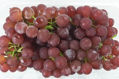 Fresh red grapes Stock Image