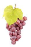 Fresh red grapes with leaves Stock Photos