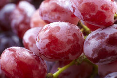 Fresh red grapes, seedless Stock Photography