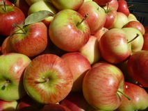 Fresh red and green apples Royalty Free Stock Photo