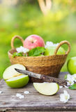 Fresh red and green apples with flowers in sunny garden Royalty Free Stock Photos