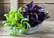 Fresh red and green basil in a strainer Royalty Free Stock Photos
