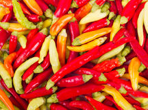 Fresh red and green chili peppers. Lots of fresh red and green chili peppers Stock Photography