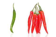 Fresh Red & green chilly Stock Photos