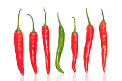 Fresh Red & green chilly Royalty Free Stock Photo