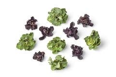 Fresh red and green flower sprouts Stock Images
