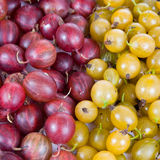 Fresh red and green gooseberry Stock Image