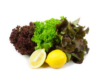 Fresh red and green lettuce Stock Photos