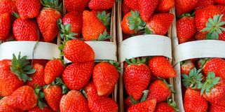 Fresh, red, green strawberries are packed in baskets. Fresh strawberries are packed in baskets royalty free stock photography