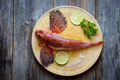 Fresh red gurnard fish Royalty Free Stock Photos