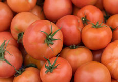 Fresh red healthy  tomatoes Royalty Free Stock Images