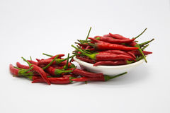 Fresh Red hot chile Royalty Free Stock Image
