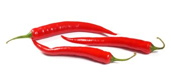 Fresh red hot chili pepper Royalty Free Stock Image