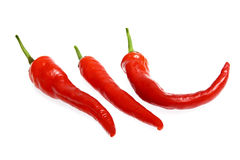 Fresh red hot chili pepper Stock Image