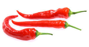 Fresh red hot chili pepper Royalty Free Stock Photo