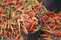 Fresh red hot chili peppers. For sale at market Stock Photos