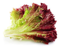 Fresh red lettuce Stock Images
