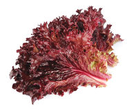 Fresh red lettuce Royalty Free Stock Images