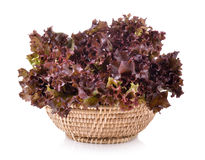 Fresh red lettuce in the basket isolated on   white background Stock Photo