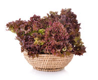 Fresh red lettuce in the basket   on  white background Stock Images