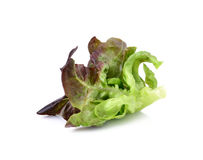 Fresh red lettuce leaves Stock Photo