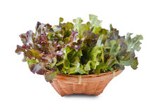 Fresh red  lettuce leaves isolated on white Royalty Free Stock Photos