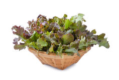 Fresh red  lettuce leaves isolated on white Royalty Free Stock Images