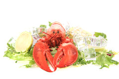 fresh red lobster Stock Image