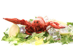 fresh red lobster Stock Photo