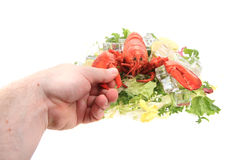 fresh red lobster Stock Photos