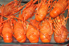 Fresh red lobsters Stock Image