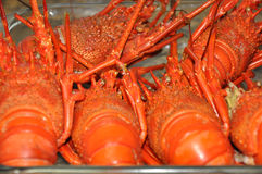 Fresh red lobsters Stock Photos
