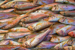 Fresh red mullet. For sale on a fish market Stock Photo