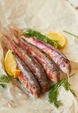 Fresh red mullet. With lemon and dill Royalty Free Stock Image