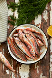 Fresh red mullet. With lemon and dill Stock Photography
