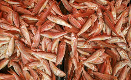 Fresh red mullet on market stall. Fresh red mullet fish on sunny Mediterranean market stall-close up Stock Image