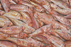 Fresh red mullet for sale on fish market Stock Image