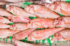 Fresh red mullet Royalty Free Stock Photography
