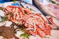 Fresh red mullet for sale on fish market Stock Images