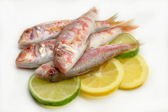 Fresh red mullet Stock Photo