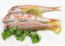 Fresh red mullet Stock Image