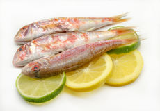 Fresh red mullet Stock Photography