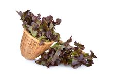 Fresh red oakleaf lettuce in dipper and on white background. Fresh red oakleaf lettuce in dipper and on a white background Royalty Free Stock Photos